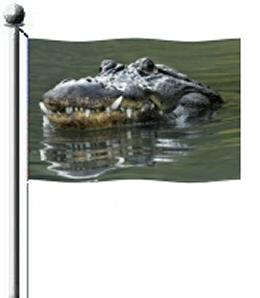 Gator™ UV Video Gallery